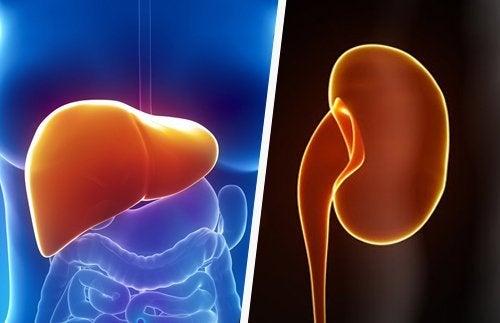 Como manter o fígado e os rins saudáveis de maneira natural