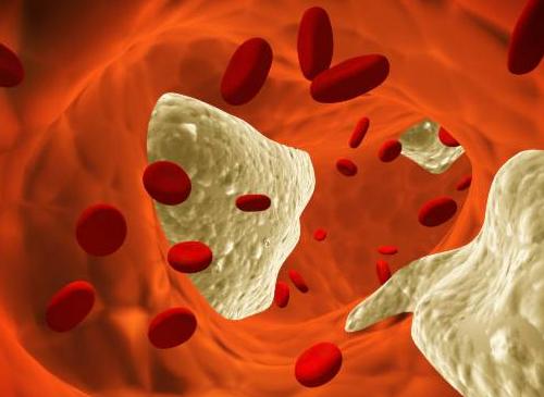 7 Mitos que você deveria saber sobre o colesterol
