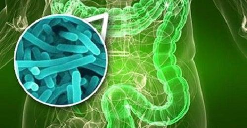 Bacteria que causa ardor, diarreia e inchaço