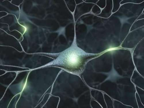 Funcionamento dos neurônios no hipotireoidismo