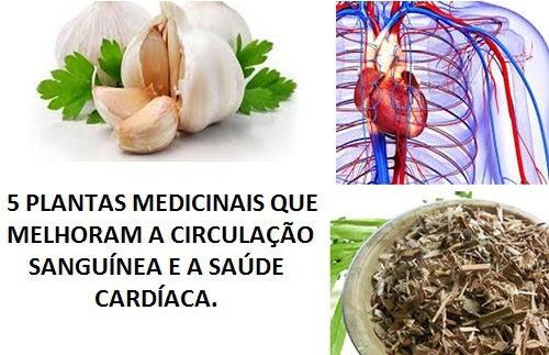 5 plantas medicinais que melhoram a circulação