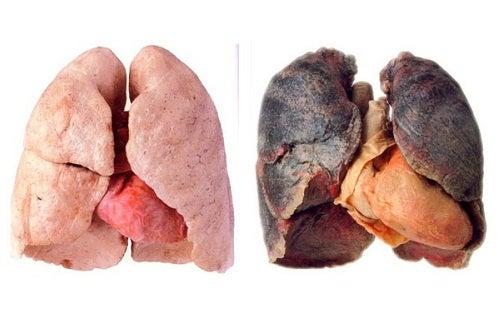 Dicas para limpar os pulmões