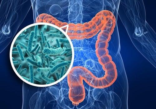 Quer melhorar sua saúde? Comece pelos intestinos