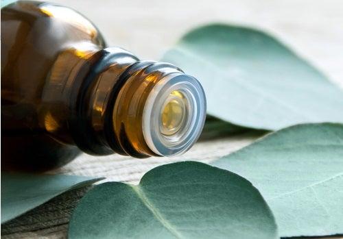 Oléo de eucalipto para tratar artrite