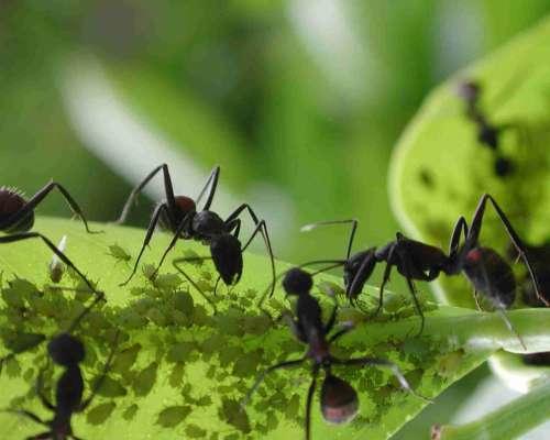 Formigas em casa.