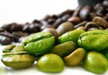 grão de café verde