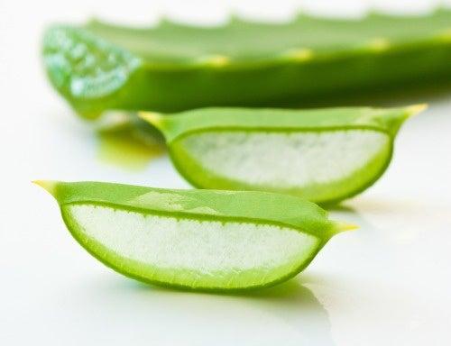 Aloe-vera-anticancerigeno