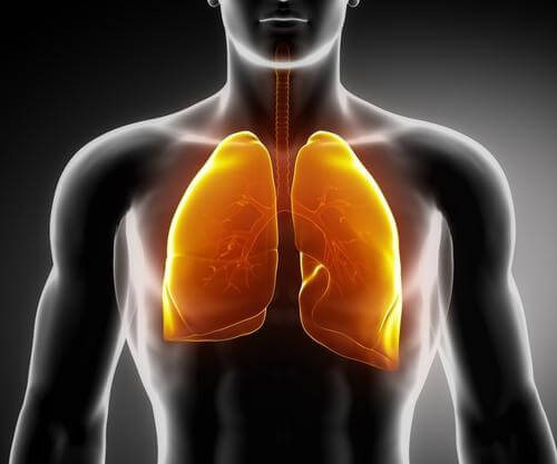 3 infusões medicinais para fortalecer os pulmões