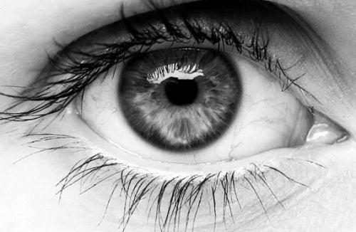 Olho-humano-500x326