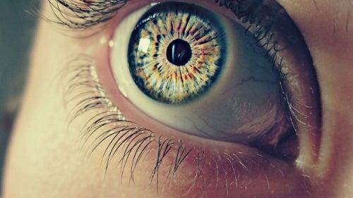 7 aspectos curiosos sobre as nossas pupilas