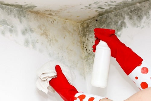 Truques caseiros para eliminar o mofo do nosso lar