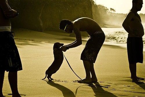 dançando com o cachorro