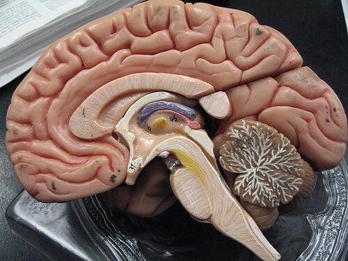 cerebro3-500x375