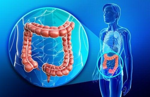 Batida anti-inflamatória e reparadora do intestino
