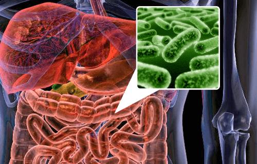 5 alimentos para repovoar a flora intestinal