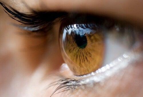 A conexão dos olhos com o cérebro