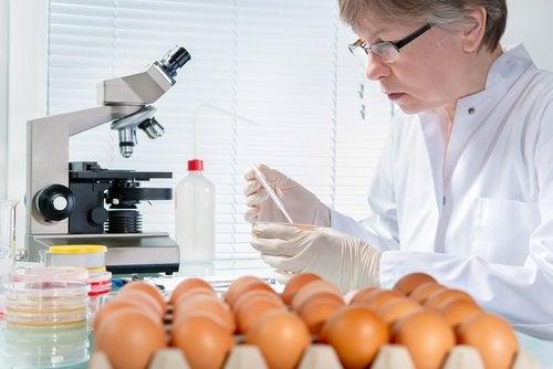 Ovos-e-salmonela