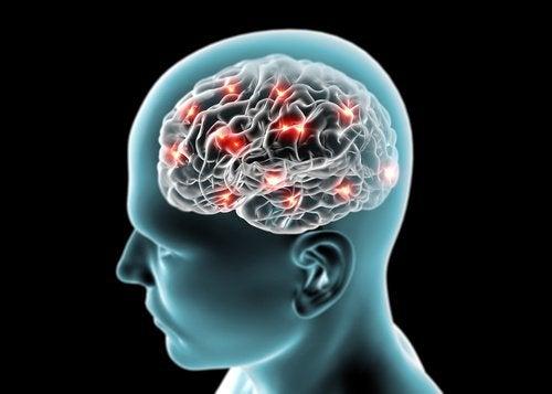 pepino protege o cérebro