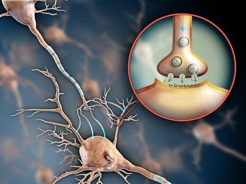 Sistema-nervoso-e-fibromialgia