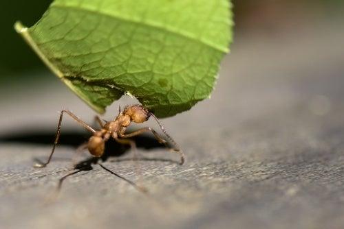 Afastar-as-formigas