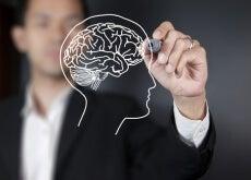 Quais são as partes do cérebro e suas principais funções? Hanna O cérebro é o encarregado de controlar e regular as funções do corpo. Este órgão é formado por milhares de células nervosas que respondem a diferentes estímulos que são enviados desde o organismo até o exterior. Atualmente continuam pesquisando para conhecer mais mas hoje revelaremos coisas interessantes. Não perca! http://melhorcomsaude.com/quais-sao-as-partes-do-cerebro-e-suas-principais-funcoes