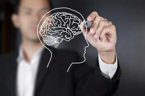 Quais são as partes do cérebro e suas principais funções?
