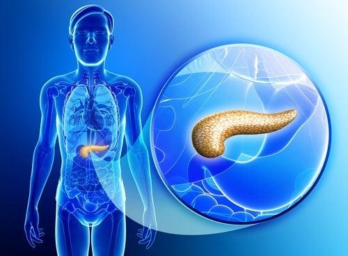 Como-depurar-o-pancreas