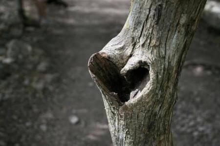 Árvore representando pensamentos amorosos