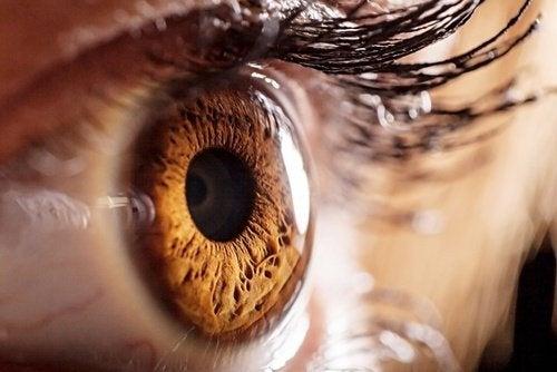 Lente-e-visão