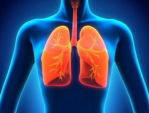 Resultado de imagem para pulmão
