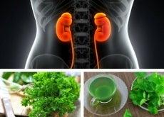 As 3 melhores infusões para melhorar sua função renal
