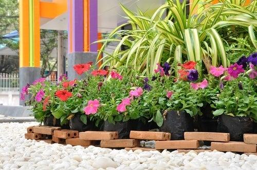 Melhorar as plantas com água oxigenada