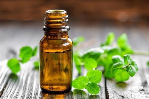 Hortelã é uma planta que pode aliviar a dor
