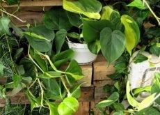 Plantas de interiores que podem ser perigosas