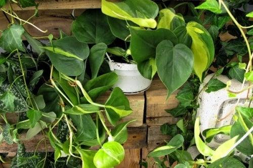 5 plantas de interiores que podem ser perigosas