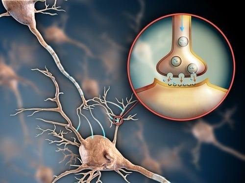 6 formas de manter seu sistema nervoso saudável