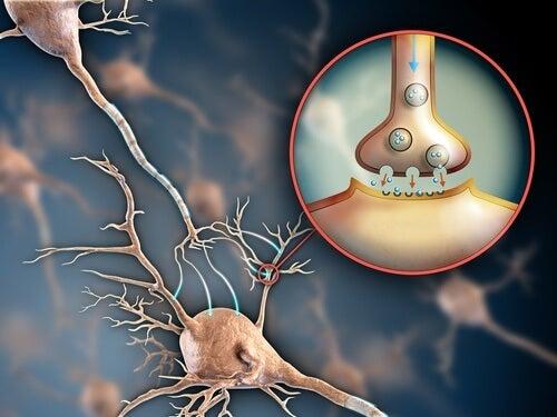 6 formas de manter o sistema nervoso saudável