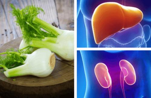 Erva-doce, remédio tradicional para curar o fígado e os rins