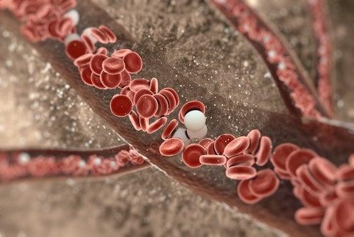 Dicas e remédios para rejuvenescer as artérias naturalmente