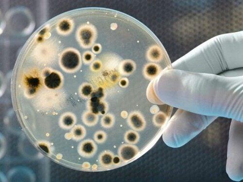 Cientista observando bactérias