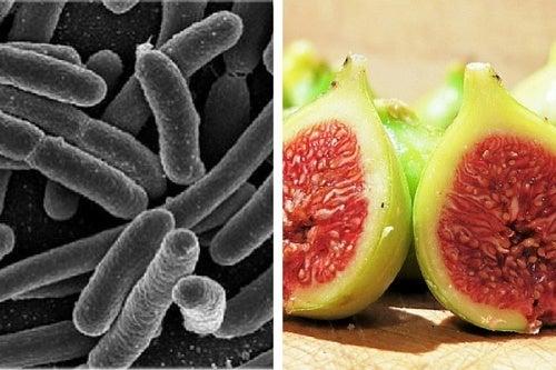 Tratamento das bacterias com figos