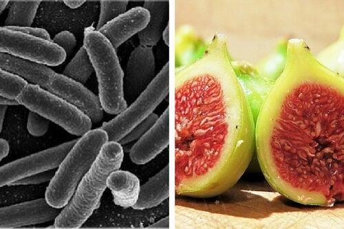 Elimine bactérias do estômago com um tratamento eficaz com figos
