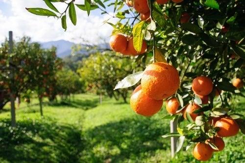 Em vez de beber água, você pode consumir laranja, por exemplo