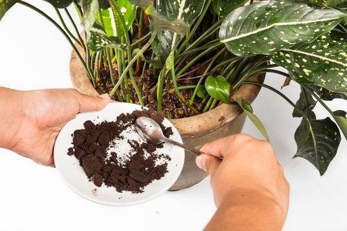 Adubo-organico-com-cafe