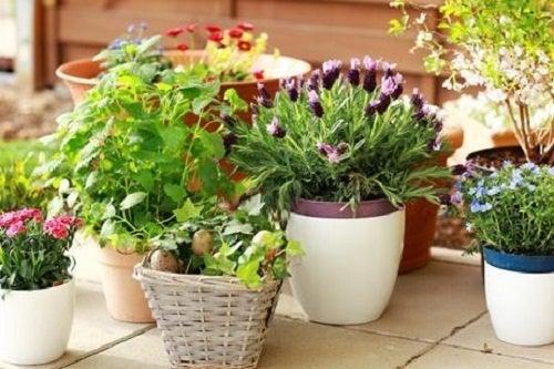 Plantas para limpar e purificar a casa