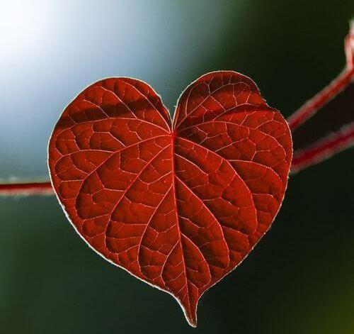 A depressão ajuda a desenvolver doenças do coração