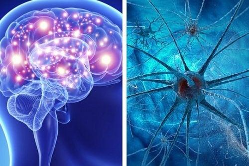 9 hábitos que podem afetar a saúde cerebral