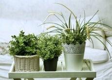 Plantas que ajudam a pegar no sono
