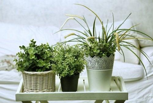 5 plantas para pegar no sono que você pode ter no seu quarto