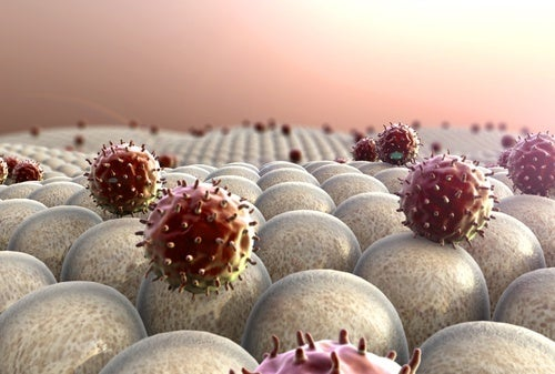 Sementes de abacate favorecem o sistema imunológico